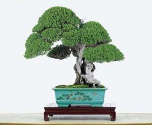 pin-a-cinq-feuilles