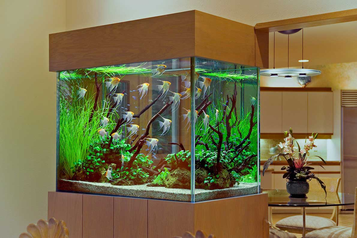 l aquarium un objet d coratif. Black Bedroom Furniture Sets. Home Design Ideas